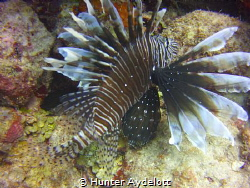 The Lion Fish abound by Hunter Aydelott